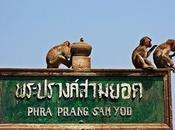 Buri, città delle scimmie!