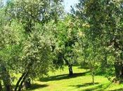 Creme convincono sono all'olio d'oliva!