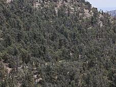 Deforestazione Arabia Saudita?