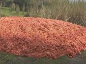 Sicilia: pastazzo degli agrumi, scarto preziosa fonte energetica, parte progetto Coca-Cola Università Catania