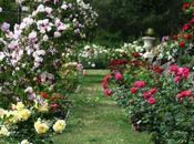 giardino senza rose
