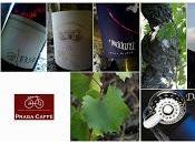 colore vino dipende dalla luce guarda. Tenuta Fessina all'Enoteca Cantina Fuori Programma targato Etna. prossimo maggio Bologna