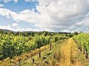 grande vino bianco sfida migliori Chenin Blanc mondo