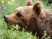 amici l'orso