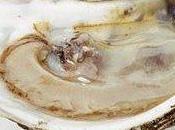 ostriche stanno sparendo mari tutto mondo