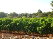 Formentera, un'isola tutta scoprire