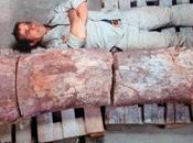 Trovati Patagonia resti dinosauro grande mondo