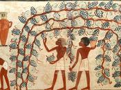 vino nell'antico Egitto