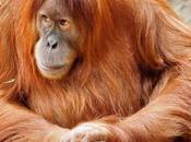 Malesia, Borneo tutta natura