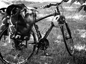 CicloTurismo#NordEst-Solo un'altra pedalata-ilgirandoliereparte