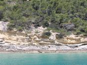 Isole Tremiti: Domino