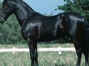 Napoli, regolamentato lavoro cavalli