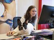 Porta cane lavoro… Yamamay Carpisa