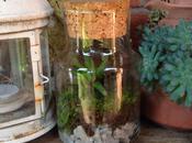 Luglio Senza Plastica: terrarium fai-da-te