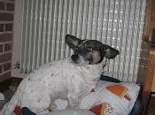 Turbo,amore prima vista