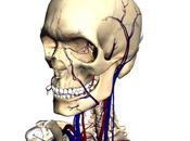 Google Body Browser: esploriamo corpo umano!