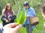 Percorsi etnobotanica maria sonia baldoni. montemitro luglio