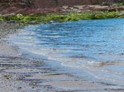 L'Isola Bute: Scartare