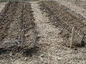 Come coltivare l'orto senz'acqua