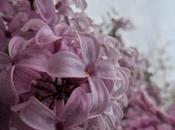 Shades mauve, joys Spring.