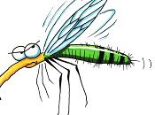 zanzara canterina