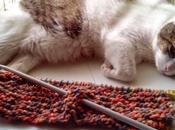 Progetto maglia gatto