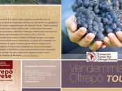 Vendemmia Oltrepò Pavese Tour: pacchetti turistici vigne cantine