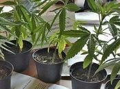 L'esercito italiano coltiverà marijuana