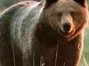 Figli un'orsa minore