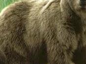 Povera mamma orsa