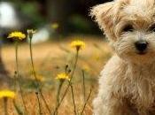Omeopatia: nuova frontiera nella cura degli animali