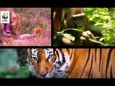 Aiutaci salvare specie animali: minacce.