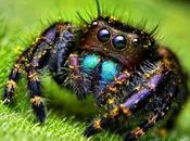 Fili, ragni, ragnatele vecchio romanzo