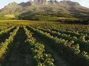 vini Africa avanzano