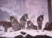 Francesca Silvio: coppia trasgressiva c'è. Tosi abbattere lupi beccandosi denuncia