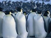 Film stasera sulla chiaro: MARCIA PINGUINI (dom. sett. 2014)