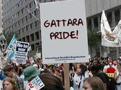 Gattare