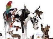 dischi parlanti festa degli animali.