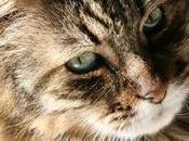 gatto amava olive