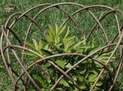sostegni piante