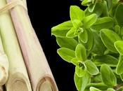 Lemongrass ritrovo della vitalità
