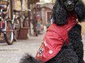 Pets Love Trudi Camon, tutto serve amato pet!
