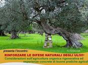 Serata sulle buone pratiche agricole Aradeo (Le)