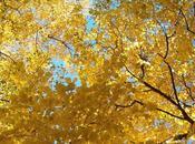 canzoni sull'autunno.