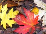Pensieri d'autunno/ autumn thoughts