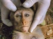 sperimentazioni sugli animali sono inutili