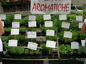 Diamoci all'erba… aromatica!