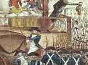 cardinale storia poco umana. Massimo Viglione