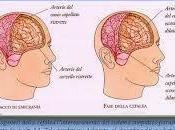 Rita l'Emodieta: emicrania, onicomicosi, lombosciatalgia, sovrappeso.