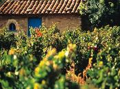 Enoturismo: degustazione vini spagnoli